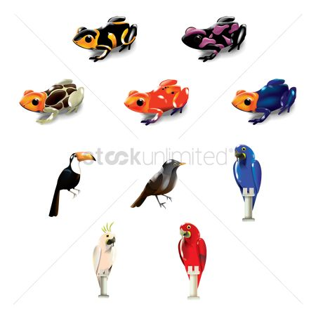 Toco toucan : Set of brazil frogs and birds