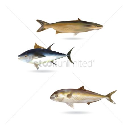 Marine life : Set of fishes