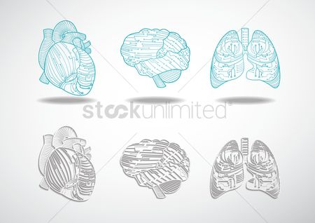 Medical : Set of human organs