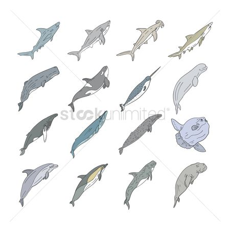 Marine life : Set of sea animals