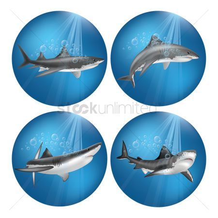 Marine life : Set of sharks
