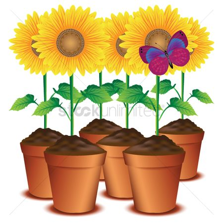 Flower pot : Sunflower pots with a butterfly
