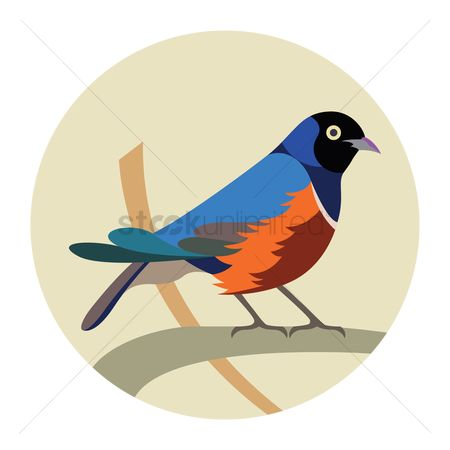 Claws : Superb starling