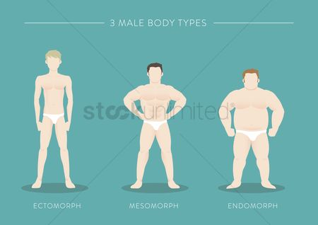Weight : Three male body types