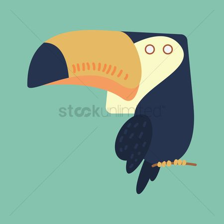 Toco toucan : Toco toucan cartoon