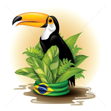 Toco toucan : Toco toucan on potted plant