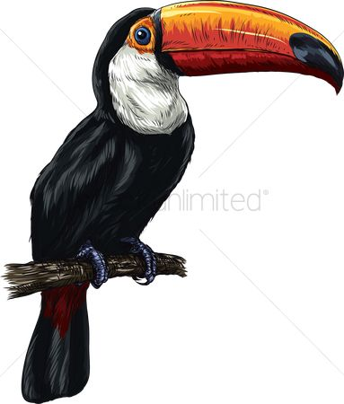 Feather : Toucan
