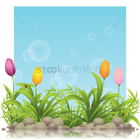 Spring : Tulips background
