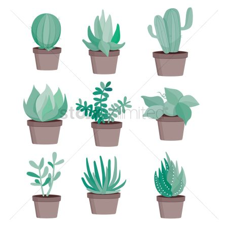 Cactuses : Types of plants