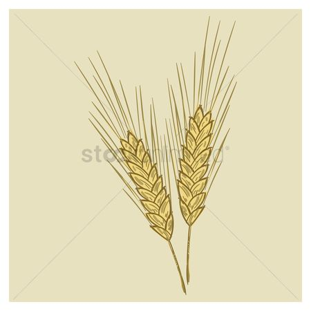 Wheats : Wheat