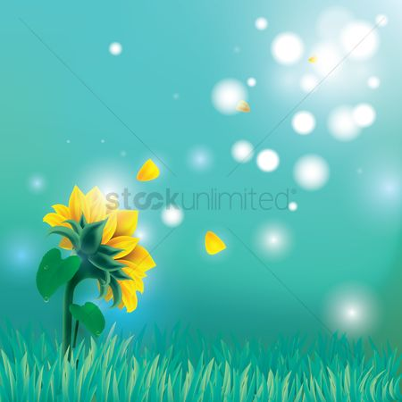Grass : Yellow daisies with misty background