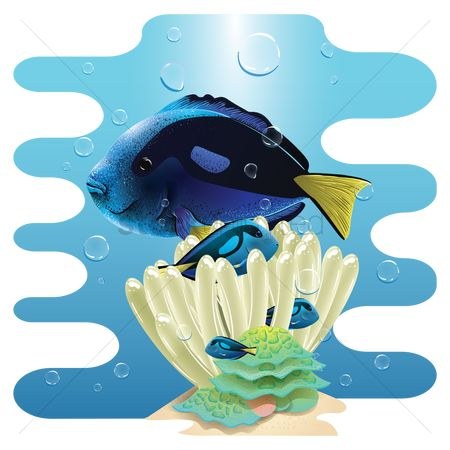 Marine life : Yellowtail damselfish