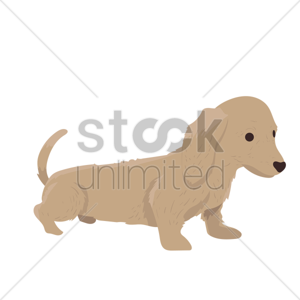 Free Dachshund puppy Vector Image - 1299887 | StockUnlimited