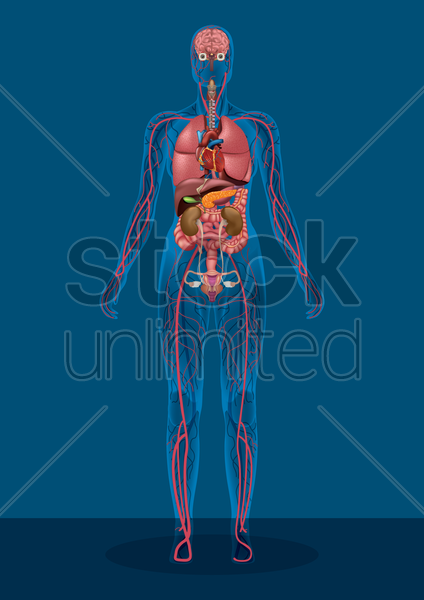 female human body vector graphic