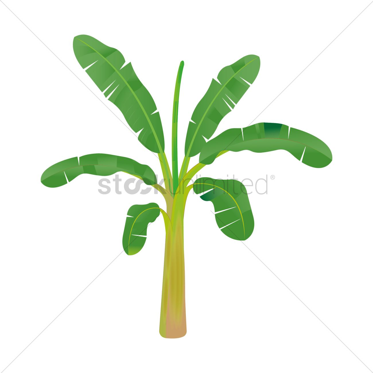 banana tree vector image 1935823 stockunlimited rh stockunlimited com banana tree leaves clip art banana tree clipart black and white