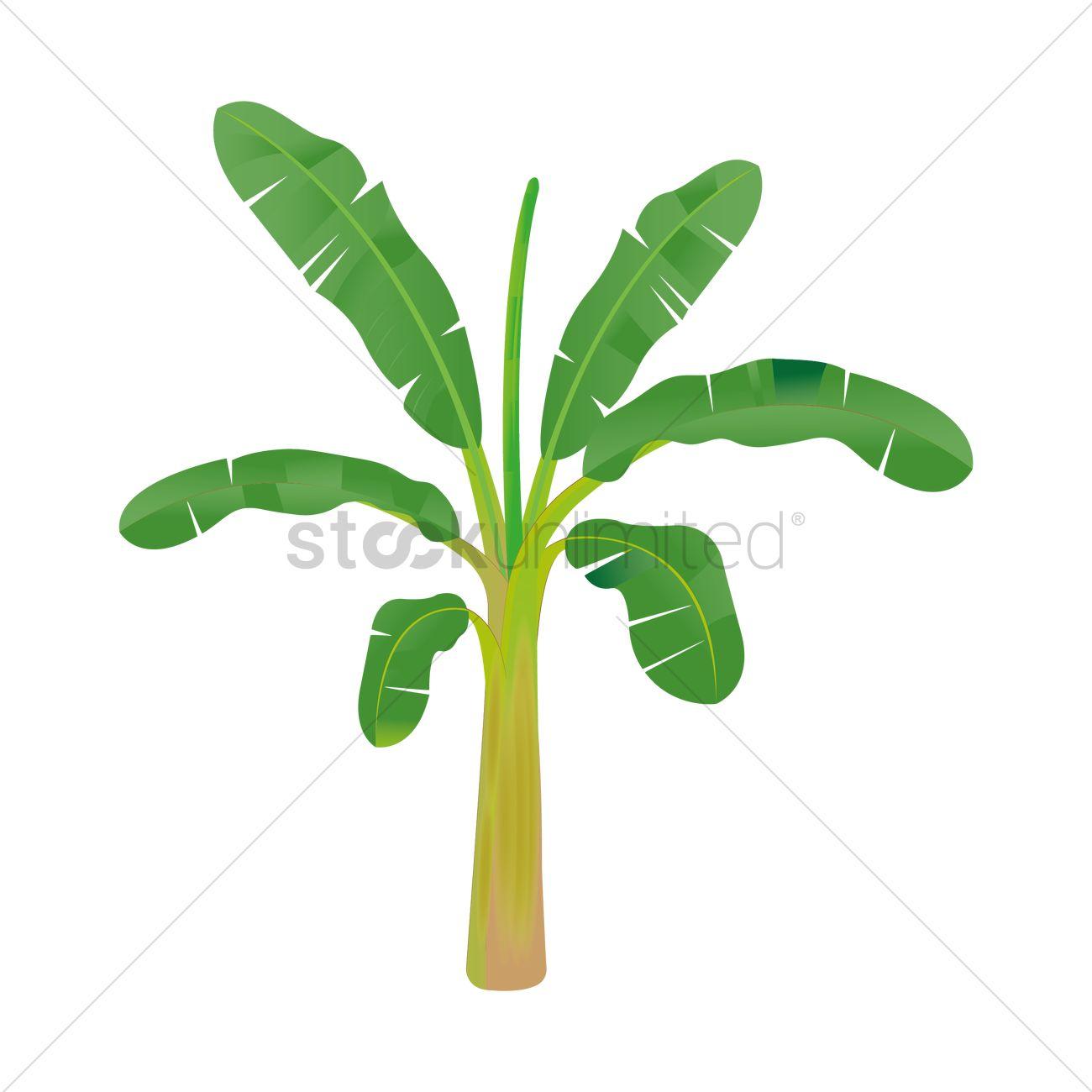 banana tree vector image 1935823 stockunlimited rh stockunlimited com banana tree clipart banana tree pictures clip art