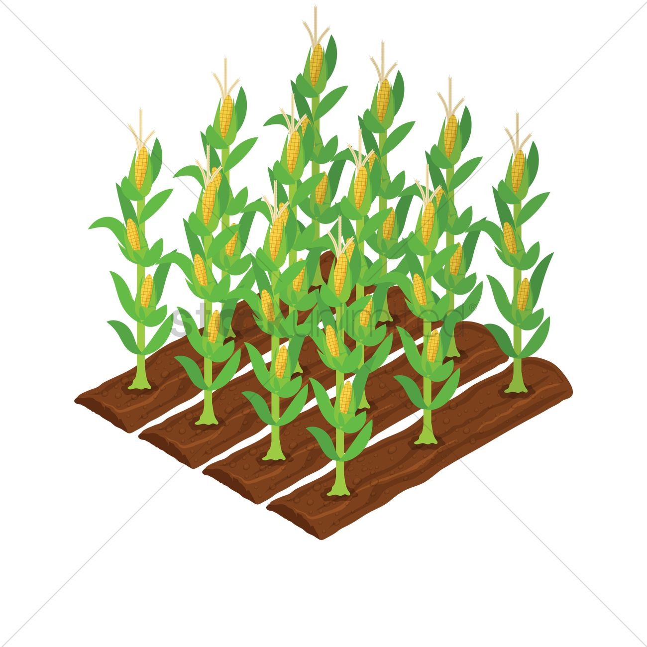Corn plantation Vector Image - 2018783 | StockUnlimited