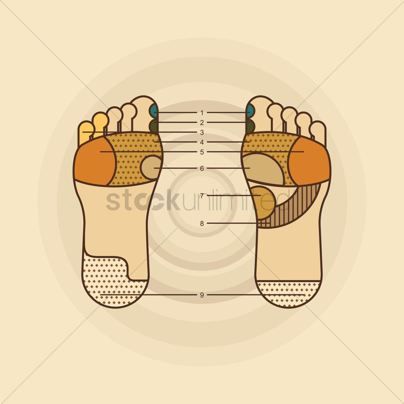 Foot Massage Diagram Vector Image