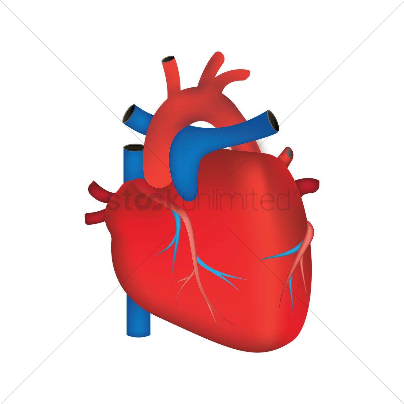 human heart vector image 1866359 stockunlimited rh stockunlimited com human heart vector drawing human heart vector free