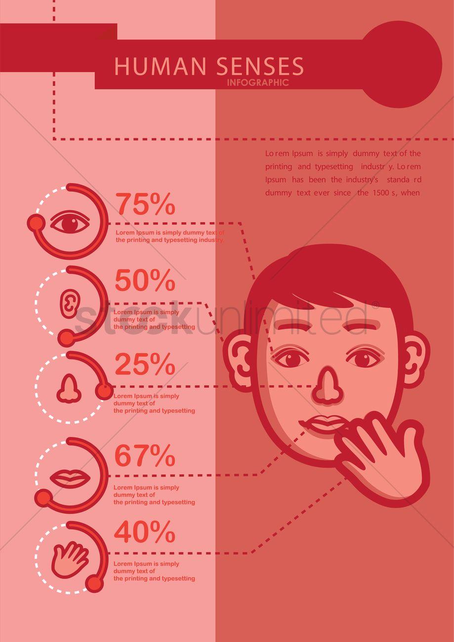 Infographic of human sense organs Vector Image - 1514079 ...