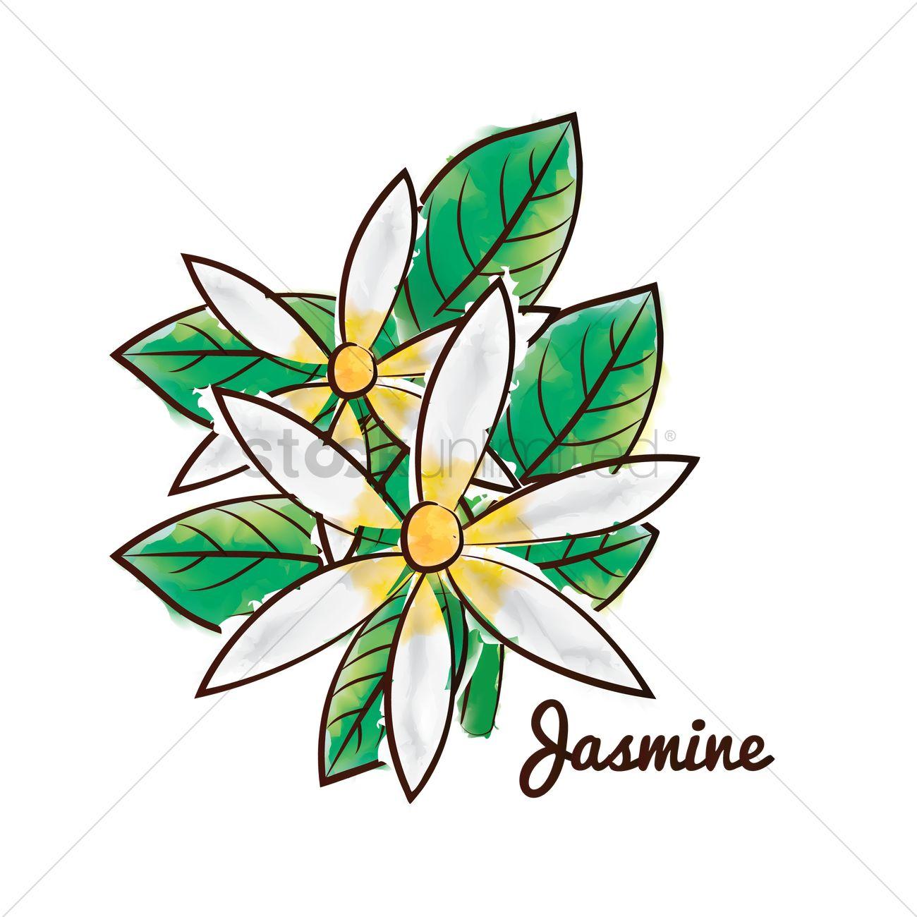 Jasmine Flower Vector Image 1611935 Stockunlimited