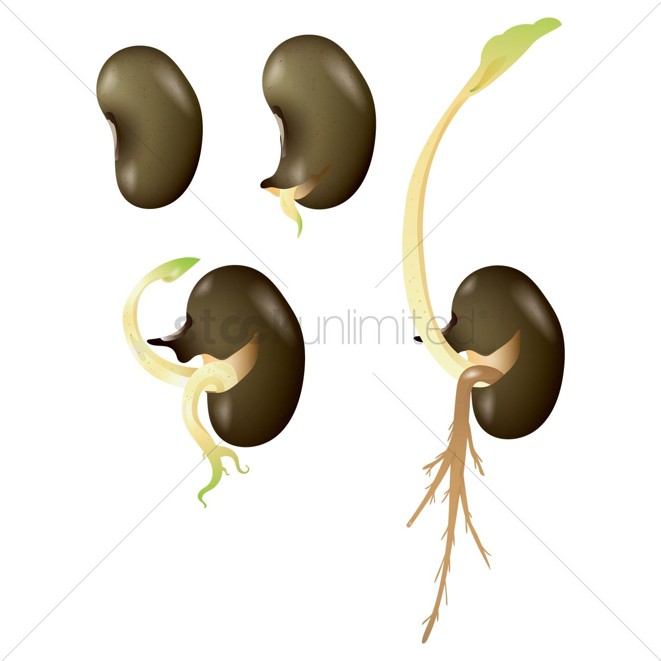 Different Seeds Stock Illustrations – 1,601 Different Seeds Stock  Illustrations, Vectors & Clipart - Dreamstime