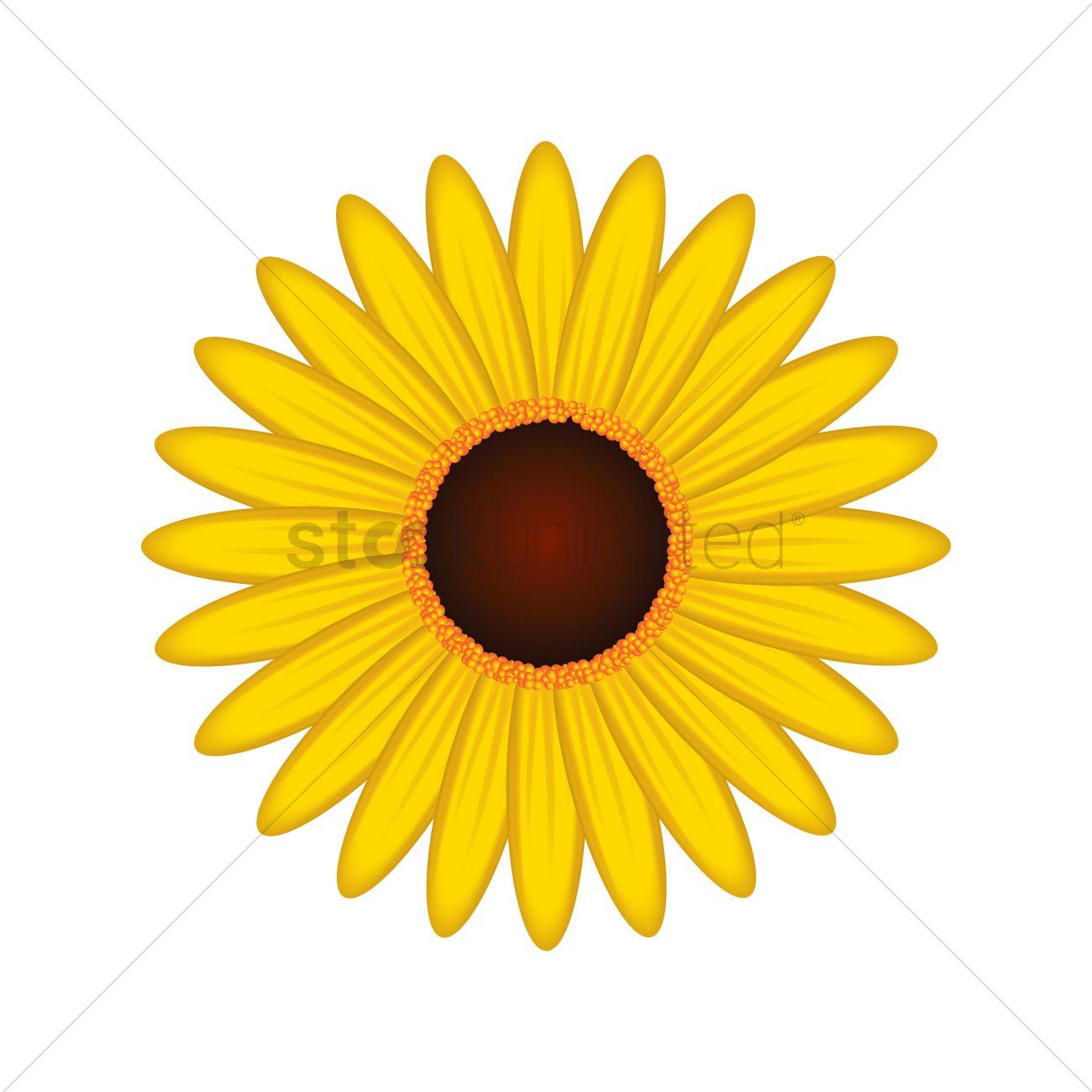 sunflower vector image 1997863 stockunlimited rh stockunlimited com sunflower vector free sunflower vector logo