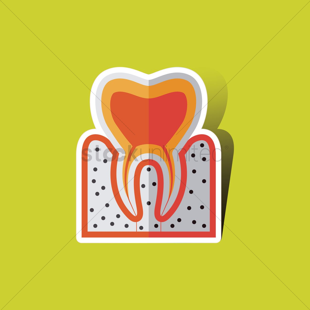 Free Tooth anatomy Vector Image - 1265299   StockUnlimited