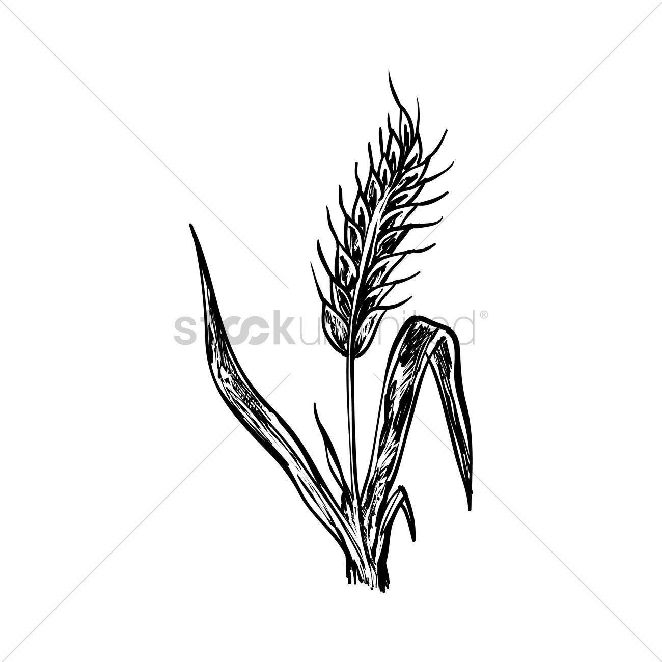 Wheat stalk Vector Ima...