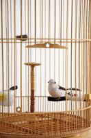 Bird in a birdcage with its cage door opened