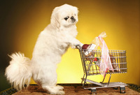 Dog pushing shopping cart