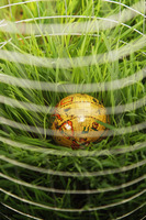Globe surrounded by wire mesh on grass