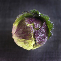 Popular : High angle close up of a cabbage