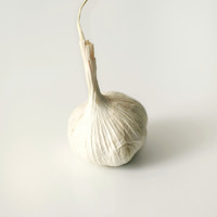 Popular : High angle close up of a garlic bulb