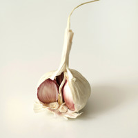 Popular : High angle close up of a peeled garlic