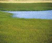 Marsh grass and water