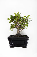 Potted plant against white background