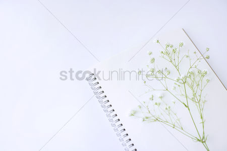 Notepad : Babybreath flowers on notebook