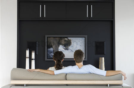 Flat : Back view of couple watching wildlife movie on television in living room