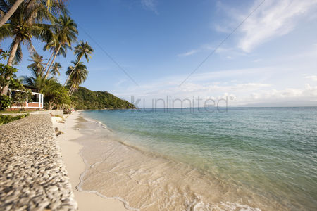 Natural : Beach and palm trees on koh pha ngan thailand