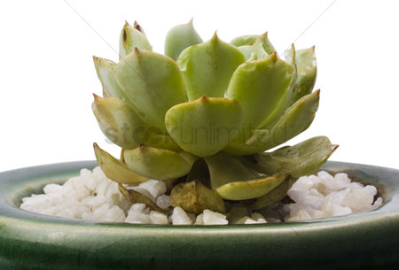 Houseplant : Close-up of a potted cactus