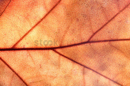 Beautiful : Close-up of autumn leaf - studo shot