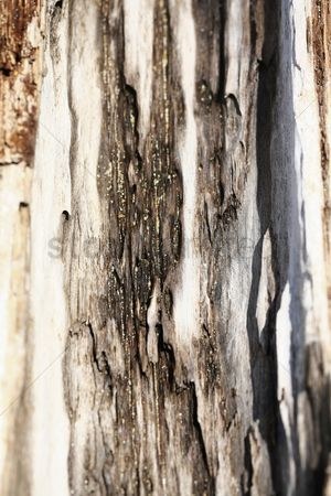 Weathered : Close-up of tree bark