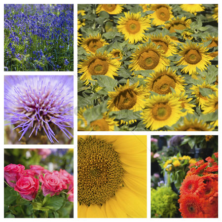 Sets : Collage of various beautiful flowers
