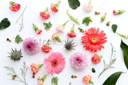 Background : Decorative floral design