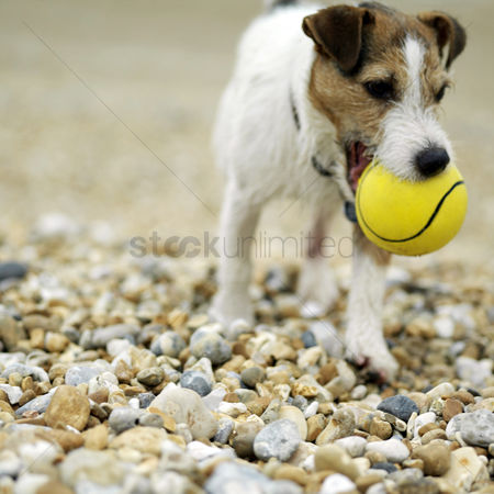 Outdoor : Dog biting on a ball