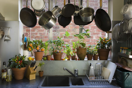 Houseplant : Domestic kitchen