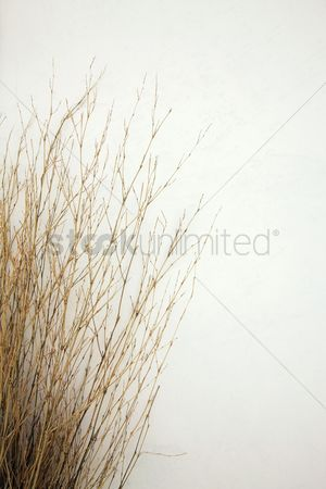 Cold temperature : Dried grasses during winter