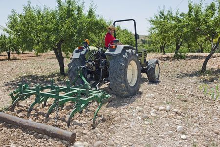 Land : Farmer ploughs olive grove in murcia