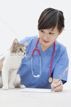 Examination : Female vet looking at cat while writing on paper over gray background
